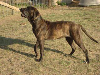 Night Watchman Kennels - Dog Breeders
