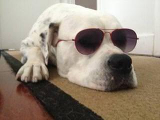 Dailey's American Bulldogs - Dog Breeders