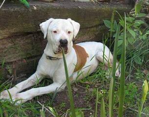 canine consult nigeria - Dog Breeders