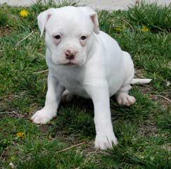 Crossroads Kennels - Dog Breeders