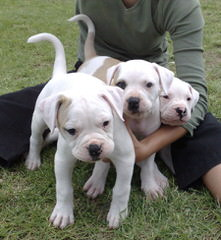 Our Little Angels Came Today - Dog Breeders