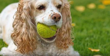 Gap Kennels - Dog Breeders