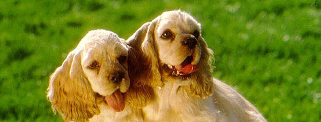 Tlc Country Kennel - Dog Breeders