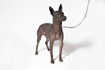 Kidd Kennel - Dog Breeders