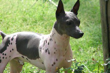 Laima - Dog Breeders