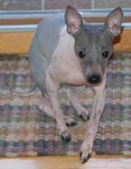 Upeniece - Dog Breeders