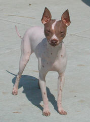 Blue Granite AHTs - Dog Breeders