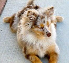Windy Corner Kennel - Dog Breeders