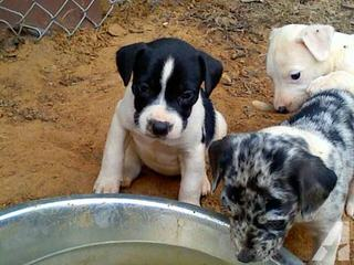 LBJ ranch - Dog Breeders