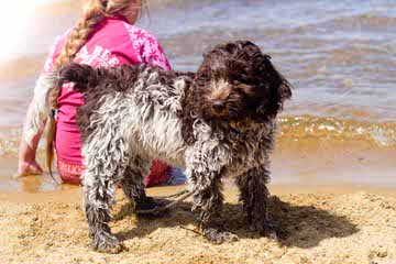 Leapfrog Labradoodles - Dog and Puppy Pictures