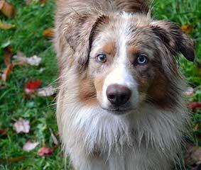 Cherokeewind Kennels - Dog Breeders