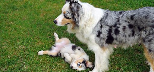 Tnt - Dog Breeders
