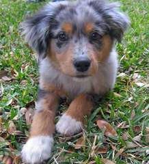 Bandit - Dog Breeders