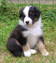 Outlaw Farm & Kennel - Dog and Puppy Pictures