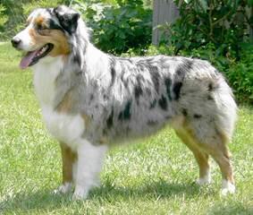 Sunnybrook Acres - Dog Breeders