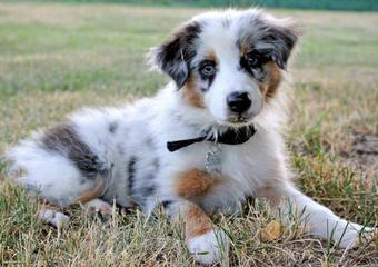 Outlaw Farm & Kennel - Dog Breeders