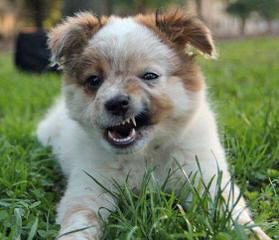 Muddyfeet - Dog Breeders