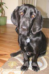 Duncan - Dog Breeders