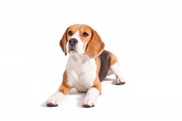 Kenzie's Kritters - Dog Breeders