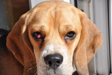 Sallson - Dog Breeders