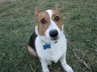 Whitby Winds Pocketbeagles - Dog Breeders