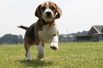 Nicodemis_Johnson@Yahoo.Com - Dog and Puppy Pictures