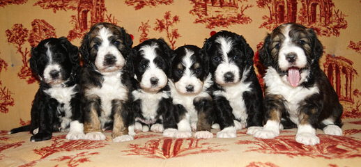 Hidden Mysteries Farm - Dog Breeders