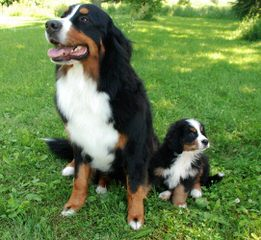 """Kennel """"della Luna di Giorno"""" - Dog Breeders"""
