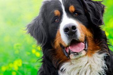 Spirit Dream - Dog Breeders