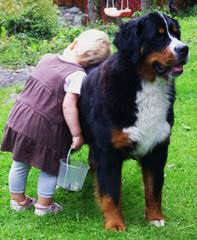 Whipperwillridge Bernese - Dog Breeders