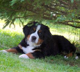 East Coast Kennels - Dog Breeders