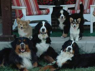Bakers Mountain Blessings - Dog Breeders