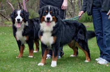Mountain Dog Kennels - Dog Breeders