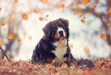 Amzina euforija - Dog Breeders