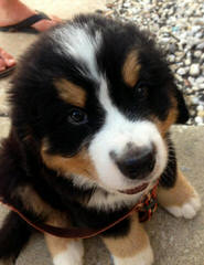 Kennel Chosna - Dog Breeders