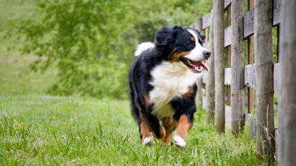 Mountain Dog Kennels - Dog Breeders