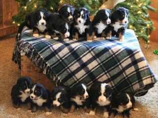 Whitecrosskennel Reg'd - Dog Breeders