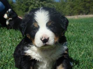 Kennel Chosna - Dog Breeders