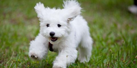 Affordablefamilypups - Dog Breeders