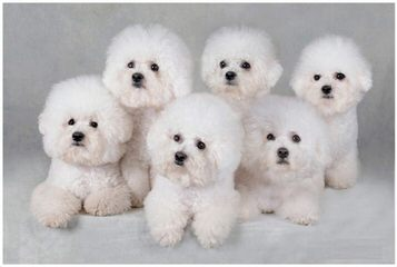 Jane's Puppy Place - Dog Breeders