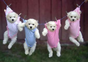 Best Friends - Dog Breeders