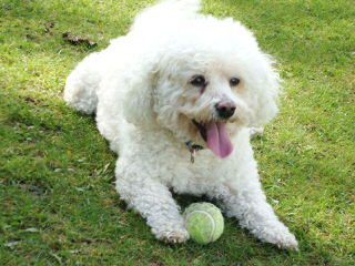 Over 40 Years Experience - Dog Breeders