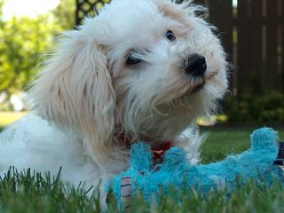 Purkypups - Dog Breeders