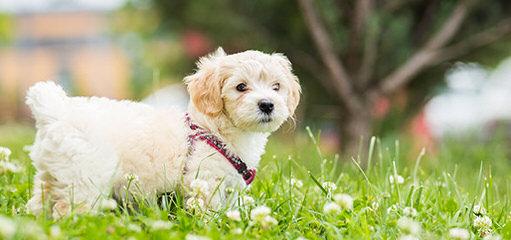 Jane's Puppy Place - Dog Breeders