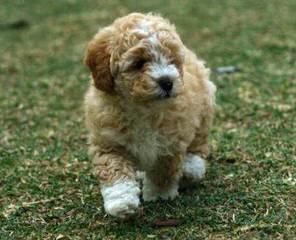 Sandra Lee - Dog Breeders