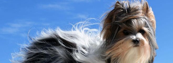 Suzannew. - Dog Breeders
