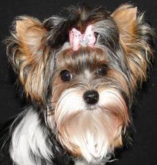 kuschelbaeer - Dog Breeders