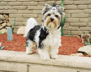 Garden Grown Biewers - Dog Breeders