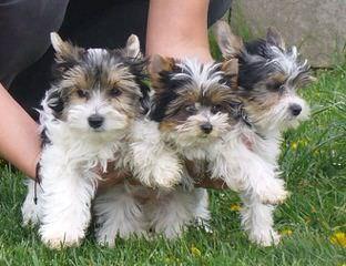 Arielle - Dog Breeders