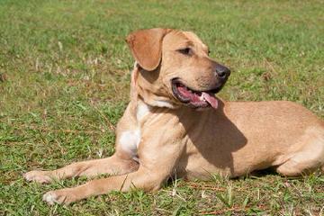 Cajun Curs - Dog Breeders